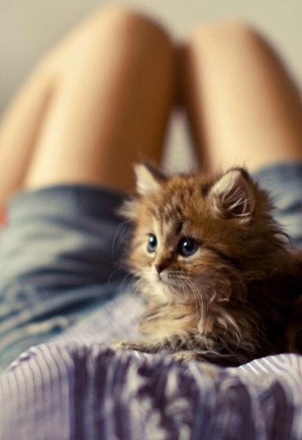 such-vodka:  Kitty en We Heart It.