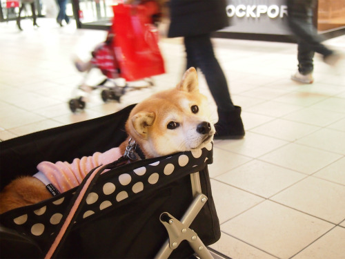 sweetshibes:  (by: http://maco123.blog76.fc2.com)