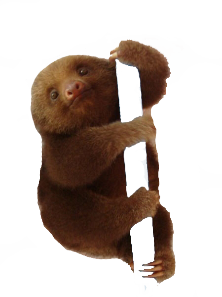 transparentsunset:  Transparent Sloth chillen on your blog.. Enjoy!