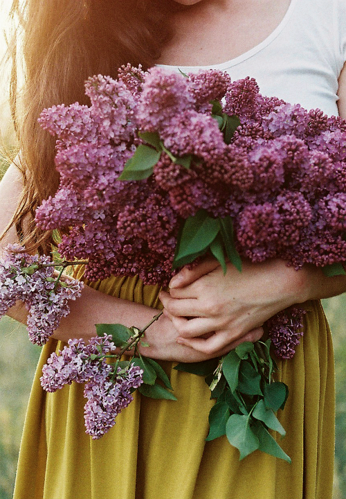 hellanne:  lilac dream (by .nevara)