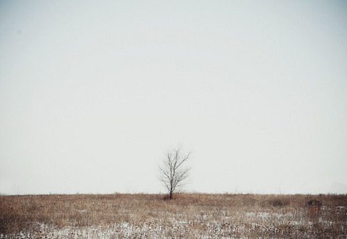 tree by Evgeniy Stepanets on Flickr.