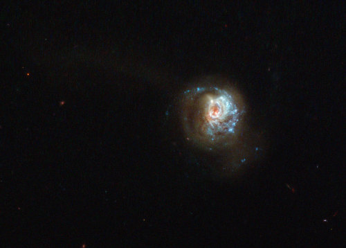 ikenbot:  A Swirl of Star Formation     This beautiful, glittering swirl is named, rather unpoetically, J125013.50+073441.5. A glowing haze of material seems to engulf the galaxy, stretching out into space in different directions and forming a fuzzy streak in this image.      It is a starburst galaxy — a name given to galaxies that show unusually high rates of star formation. The regions where new stars are being born are highlighted by sparkling bright blue regions along the galactic arms.      Studying starburst galaxies can tell us a lot about galactic evolution and star formation. These galaxies start off with huge amounts of gas, which is used to form new stars.      This period of furious star formation is only a phase; once all the gas is used up, this starbirth slows down. Other famous starbursts captured by Hubble include the Antennae Galaxies (heic0615) and Messier 82 (heic0604), the latter of which is forming new stars ten times faster than our galaxy, the Milky Way.   Wowee!