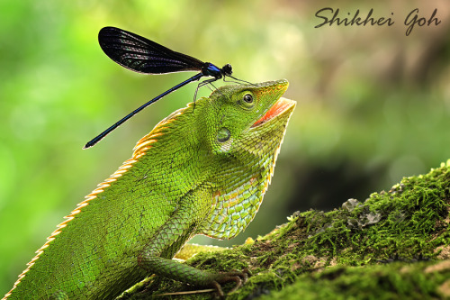 Sun Bath by shikhei goh. Thank You, Shikhei ! shikheigoh Source: 500px.com