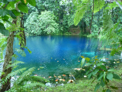 nlpple:  buddhabrot:  Jackies Blue Hole, Vanuatu  Been here!