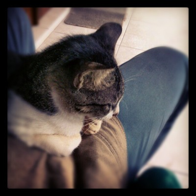 Ah stop it you.. :> #cat #afternoon #rainy #laydown #january #2013