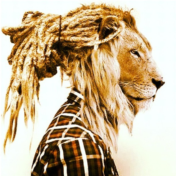 -shesstilldhabaddest:  #DreadHead #DreadHeadShawty #Lion #Leo #Dread #Beautiful #Love #Sexy #Plaid #Collar #ButtonUp #Hot