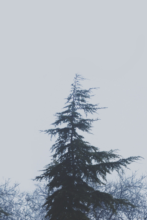 Pale Grunge Tumblr