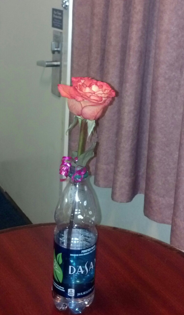 A rose from the titty bar last night, classing up the really cheap motel I switched to.