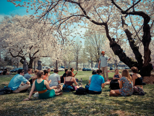 A mathematics class at American University is held under the campus' blooming cherry blossom trees.
