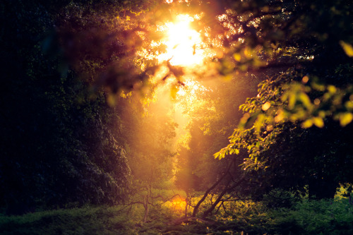 mykindafairytalee:  you shine in the distance (by andrew evans.)