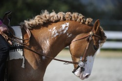 spurbroke:  The dreaded post-braid rats nest.