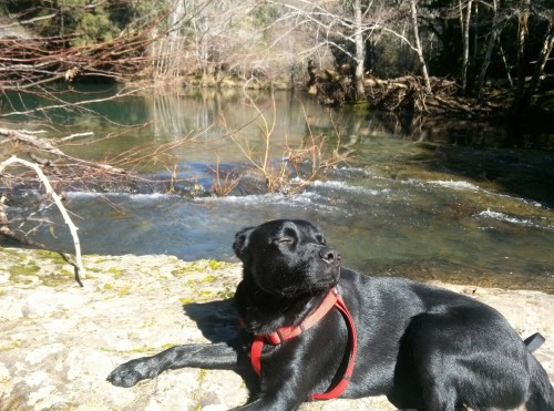 Matoll river whitethorn ca with boogy boog