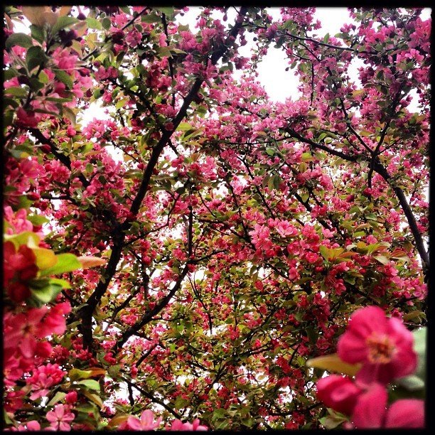 photo by Mike Ambs the trees at my moms house are starting to bloom :)