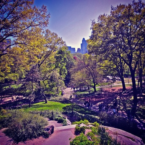 A High, Quiet Perch: Central Park NYC #centralpark #cpk #spring #nature #instanyc #nyc #newyorkcity