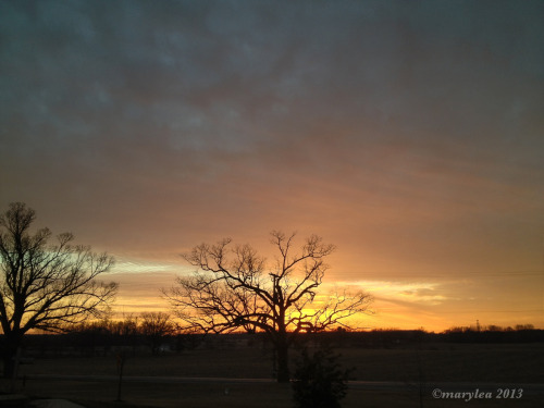 Sunset and oak trees.   January 18, 2013.