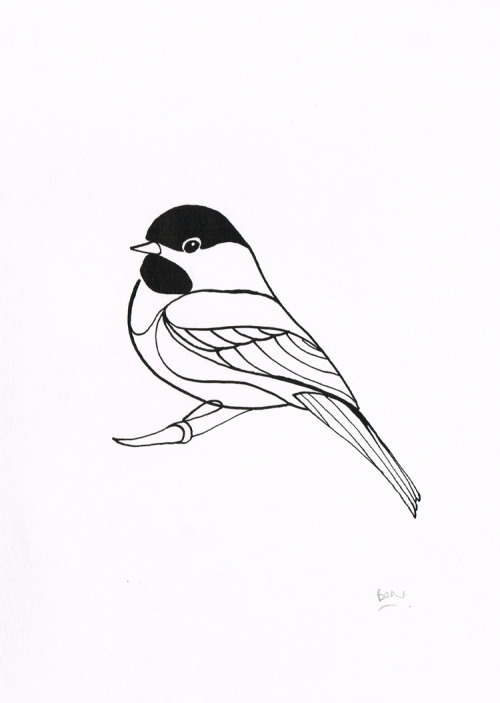 Black Capped Chickadee - Dip pen and ink drawing Now available to buy from FluidAnimals.com!