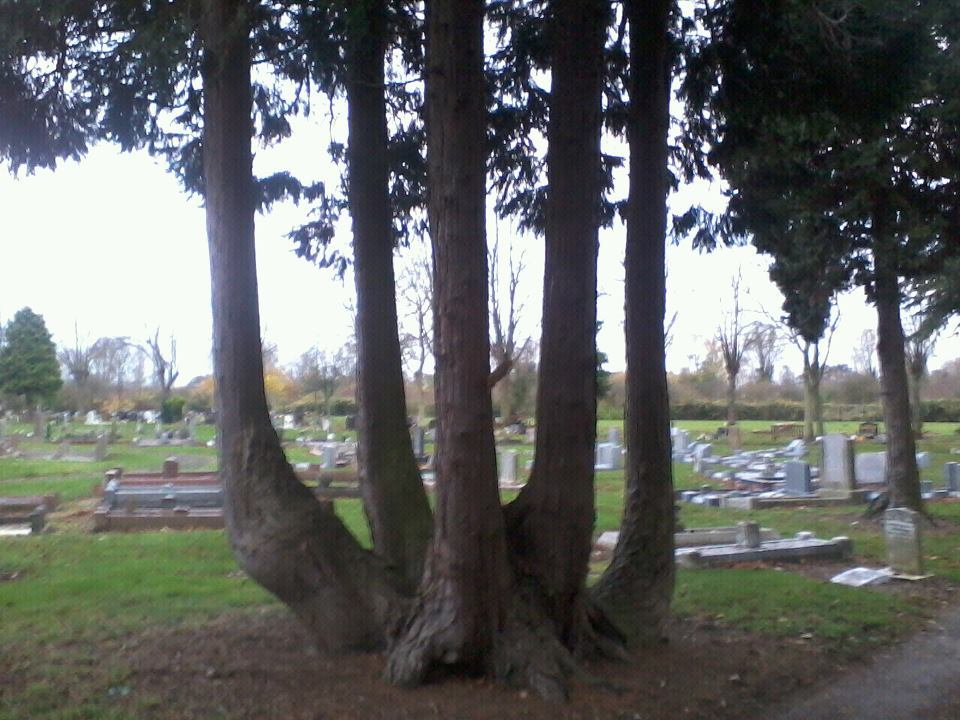 thequietshygirl:   Trees that say Allah in the cemetery where my big brother is buried <3