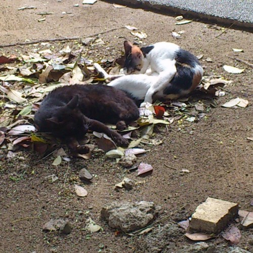 #cute #kittens frolicking under the sun. #instagrammers #instagramhub #instamood #love #tumblr tilfurthernotice.tumblr.com