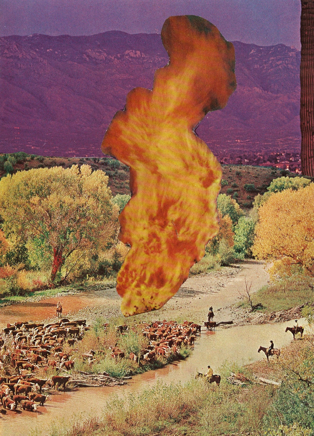 wildfire society6  tumblr  facebook  twitter
