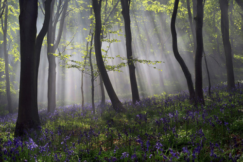 forbiddenforrest:  Secret Woods by peterspencer49 on Flickr.