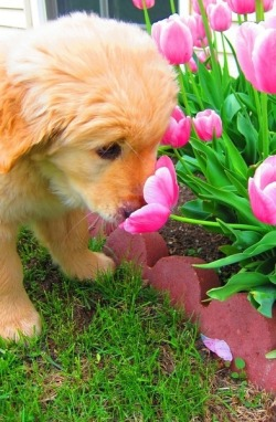 monogramsandmargaritasblog:  Stop and smell the flowers!