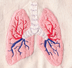 hannahscupofcare:  Human Lungs Embroidery on Flickr.