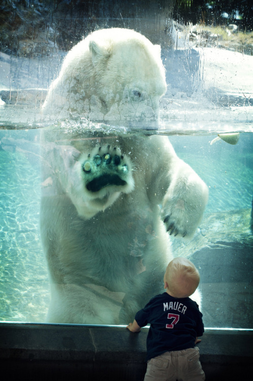 mystic-revelations:  Baby & Polar Bear (by Official San Diego Zoo)  Is it sad that the only detail I noticed at first was that that little boy is wearing a Mauer shirt? <3 Love me some Minnesota Twins ;)