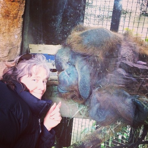 Mom bonding with Heran. #orangoutang #woodlandparkzoo #hairlove