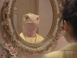 mirror reflection lizard reptilian