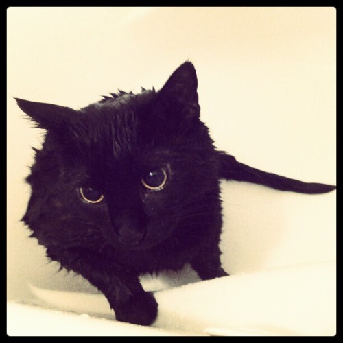 My handsome little man got a bubble bath! #kitty #cat #animals #meow #bath
