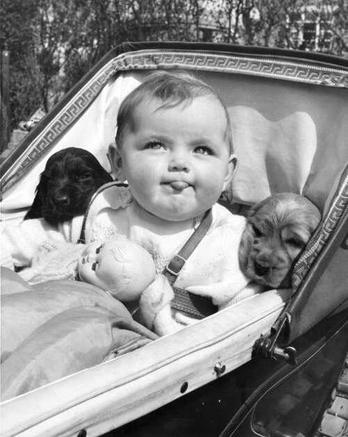 smartchickscommune:   Via Funny Vintage Photos of Dogs