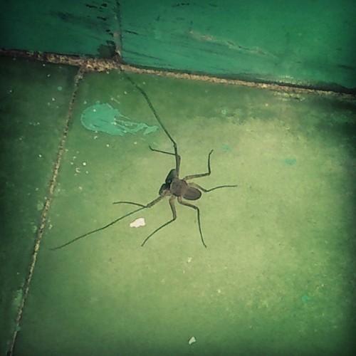 Yo, tranquilo, cagando 💩, cuando de repente, ¡ésta pinchi araña aparece! 😫