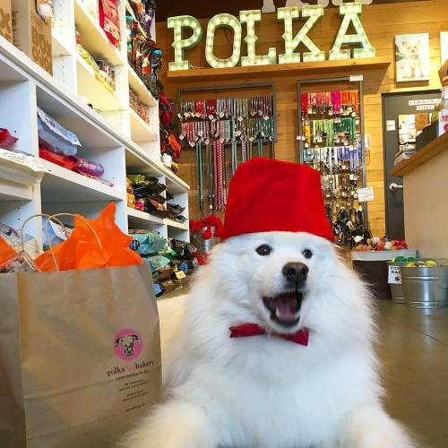 Samoyed Boston small business polka dog bakery shop small shop local boston public market dogs puppies