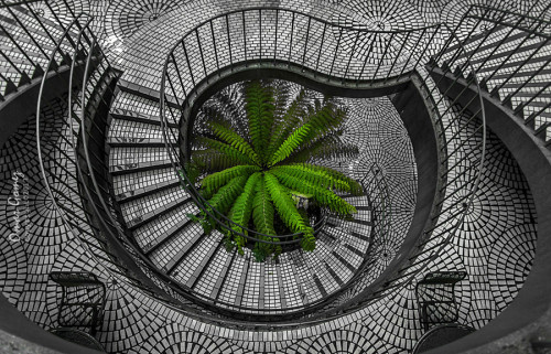 handa:  500px: - The Fern At The End by Omar Gomez