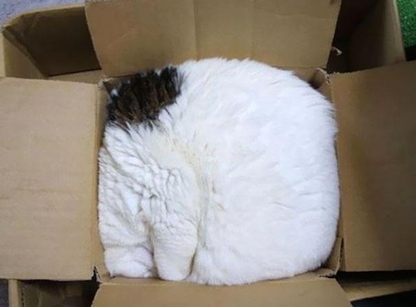 laineelepanto:  Cats.
