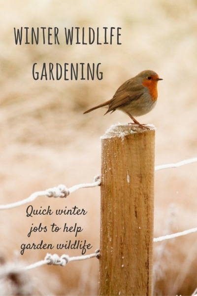 wildlife-gardening-jobs-for-winter-with-the-10
