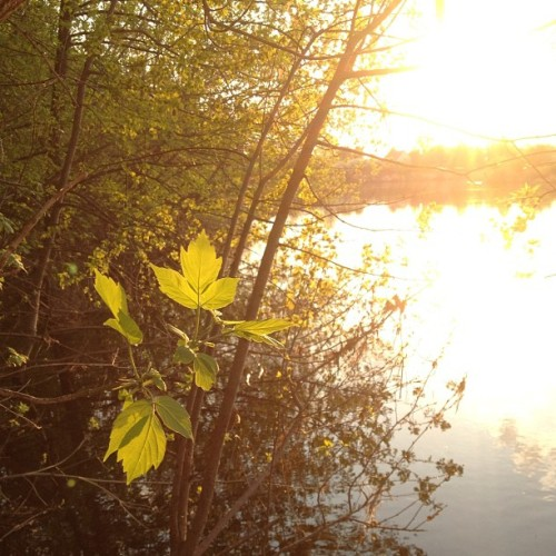 Tree over the river #sun #relax #trees #river #landscape
