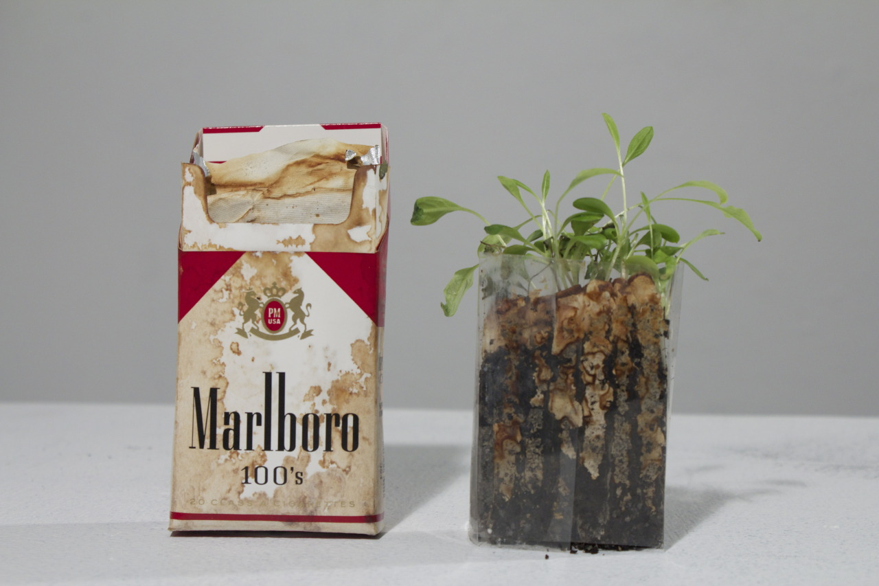 "commovente:  ""Urban Talisman"" Each cigarette was individually emptied and refilled with soil and forget-me-not seeds. Anna C Bodell, 2013"