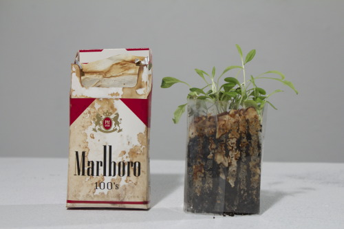 """Urban Talisman"" Each cigarette was individually emptied and refilled with soil and forget-me-not seeds. Anna C Bodell 2013"