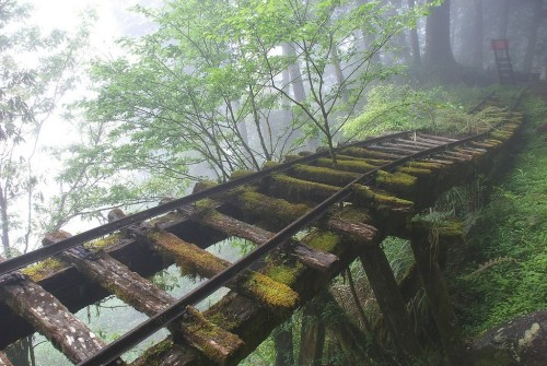 peterpayne:   	Long abandoned railroad tracks, somewhere in Japan. Amazing.