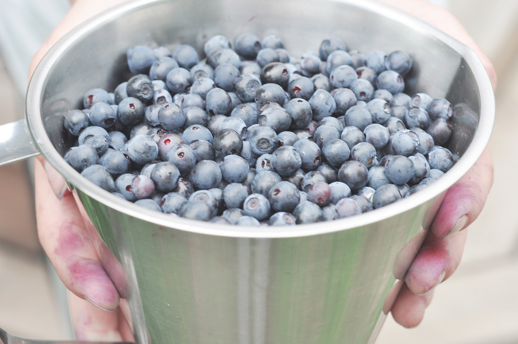 thirtieths:  blueberries II (by sofiabystrom)
