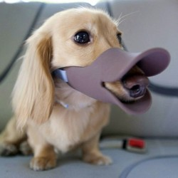 the-sound-of-sirens-in-neverland:  THIS IS A MUZZLE TO STOP DOGS FROM BITING. I NEED TO BUY THIS FOR BENTLEY. HOLY POOP THIS IS ADORABLE AND I CANNOT STOP LAUGHING.