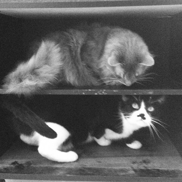 Every time I take a shelf or bookcase or box out of storage, Louie and Slick are there to help. #cat flashback photo