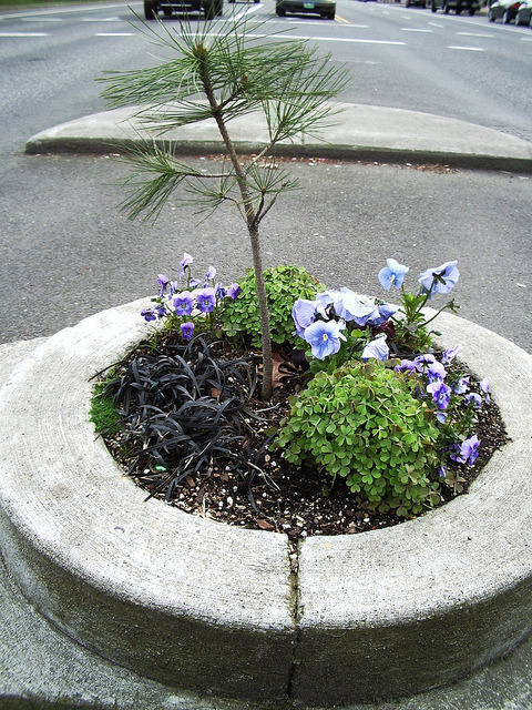 effington:  laughingsquid:  Portland's Mill Ends Park, The Smallest Park in the World  Lil tree.