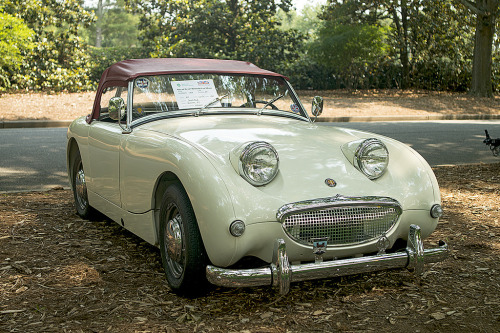 Found a cute little toad today Starring: '59 Austin-Healey Sprite (by Thumpr455)