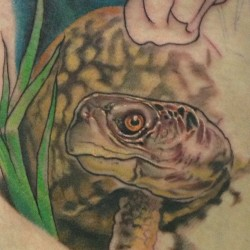 Started this garden turtle today.
