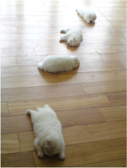stuffuwanttosee:  Check out Adorably Fat Dogs! We think #4 is hilariously cute! http://bit.ly/131MHgS