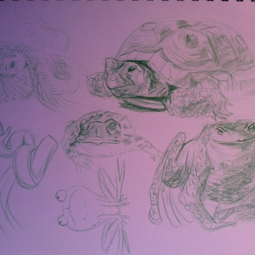 Day 8 #animals #frog #turtle #snake #drawing #art #sketching #calvinclyke