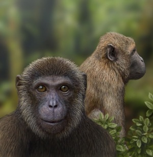 "deconversionmovement:  Fossils indicate common ancestor for two primate groups  Find suggests Old World monkeys and apes diverged 25 million years ago. Palaeontologists working in Tanzania have discovered the oldest known fossils from two major primate groups — Old World monkeys, which include baboons and macaques, and apes, which include humans and chimpanzees. The study, published online today in Nature, reveals new information about primate evolution. Continue Reading   ""…the fossil trove ""fills in a roughly 10-million-year gap in primate evolution,"" says John Fleagle, an anthropologist at Stony Brook University in New York."""