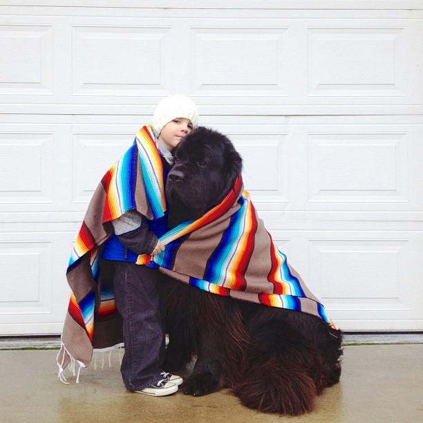 ashortgiraffe:  downeastandout:  Newfie love  I want one.